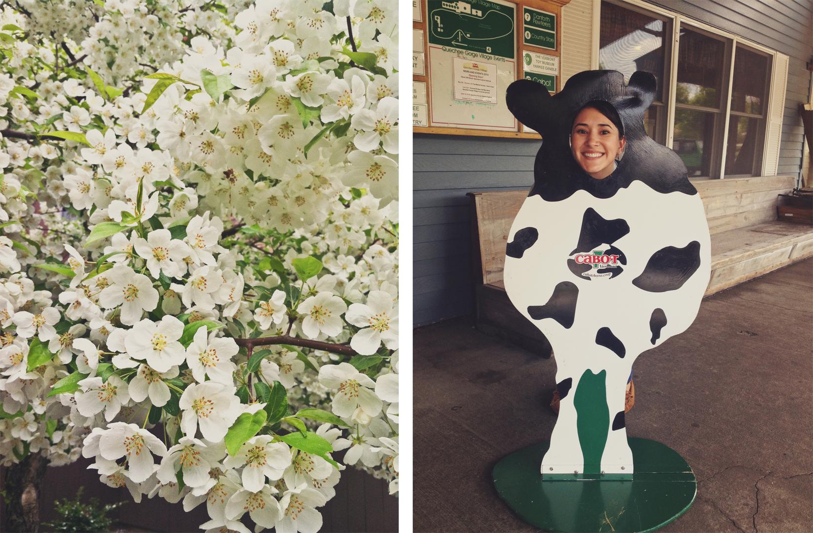 flor y vaca